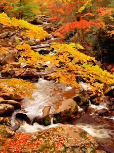 Treemont, GSMNP, TN by J.D. Mcfarlan