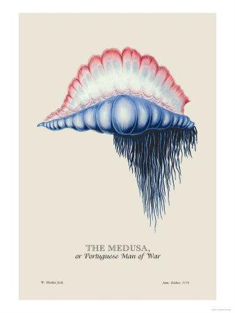 Medusa, or Portuguese Man of War