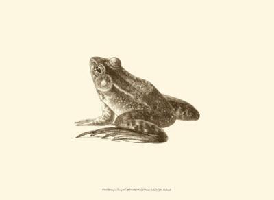 Sepia Frog I