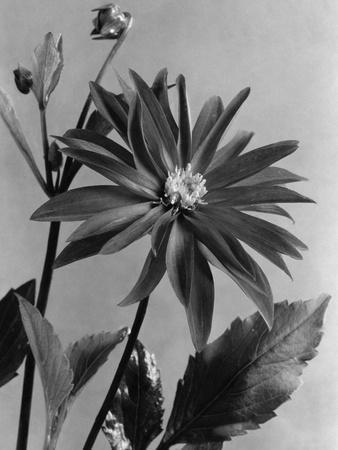 House & Garden - June 1938