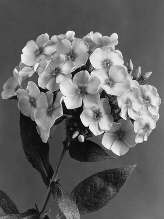 House & Garden - May 1939