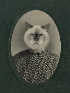 Cat Series #1 by J Hovenstine Studios
