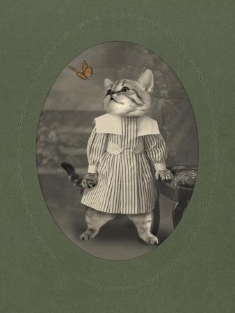 Cat Series #2