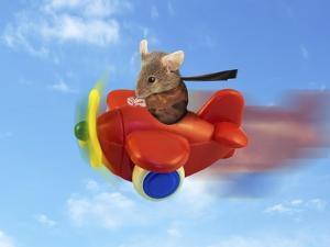 Flying Mouse by J Hovenstine Studios