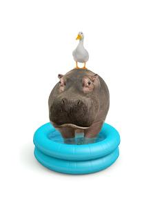 Hippo and Duck by J Hovenstine Studios