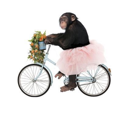 Monkeys Riding Bikes #1