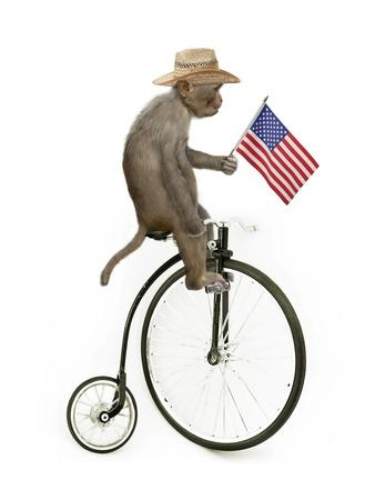 Monkeys Riding Bikes #3