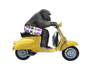 Monkeys Riding Bikes #4 by J Hovenstine Studios