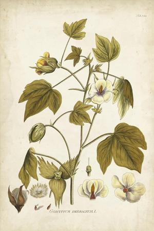 Elegant Botanical I