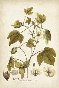 Elegant Botanical I by J.j. Plenck
