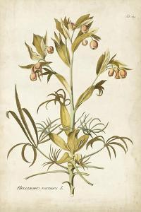 Elegant Botanical II by J.j. Plenck