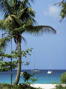 Yachts and Palms, Barbados, West Indies, Caribbean, Central America by J Lightfoot