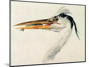 Heron with a Fish by J^ M^ W^ Turner