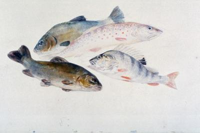 Study of Fish: Two Tench, a Trout and a Perch, C1822-1824 by J. M. W. Turner
