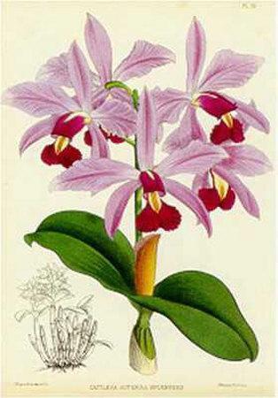 Orquideas IV