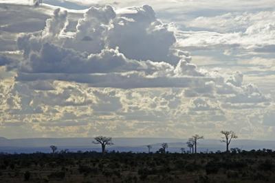 Baobabs Landscape, Region of Ihosy, Madagascar, Africa by J P De Manne