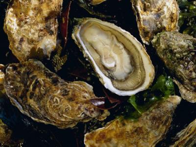 Huitres Fines De Claires (Oysters), Ile De Re, Charente Maritime, France, Europe by J P De Manne