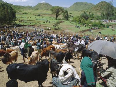 Livestock Market, Sentebe, Abyssinian Region of Choa, Ethiopia, Africa by J P De Manne