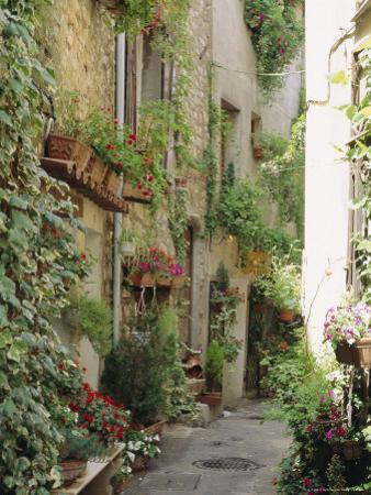 Mougins, Alpes Maritime, Cote d'Azur, Provence, France by J P De Manne