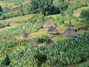 Small Village in Hosana Region, Shoa Province, Ethiopia, Africa by J P De Manne