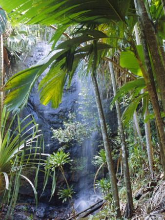 Waterfall, Vallee De Mai National Park, Praslin, Seychelles, Indian Ocean by J P De Manne
