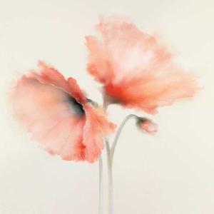 Pink Chiffon I by J^P^ Prior