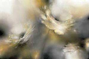 Sorbet Roses by J^P^ Prior