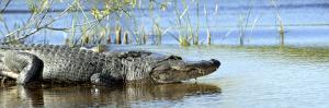 Everglades Restoration by J^ Pat Carter