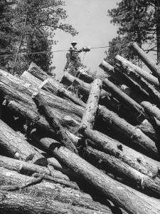 Man Lifting Logs Out of a Lumber Pile by J. R. Eyerman
