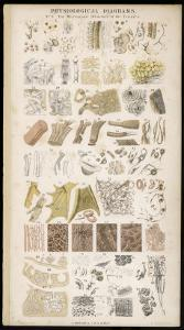 Microscopic Structure of the Texture of Various Parts of the Body by J.s. Cuthbert