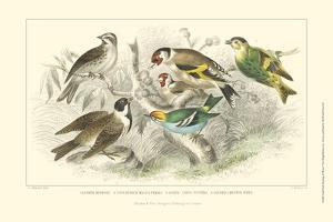 Goldfinch, Buntings & Wrens by J. Stewart