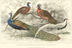 Peacock & Pheasants by J. Stewart