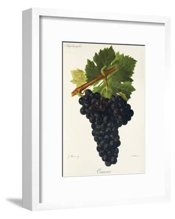 Counoise Grape