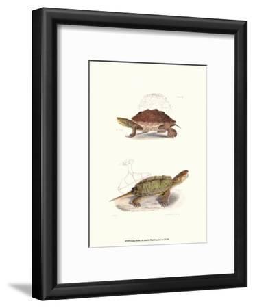 Antique Turtles II
