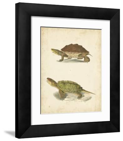 Turtle Duo II