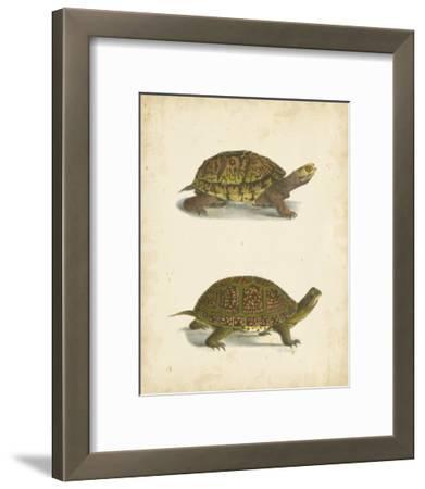 Turtle Duo III