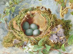 A Nest of Eggs, 1871 by Jabez Bligh