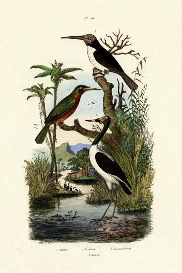 Jabiru, 1833-39--Giclee Print