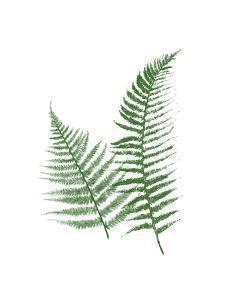 Green Ferns by Jace Grey