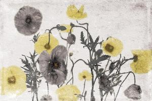 Stone Wash Poppies Light by Jace Grey
