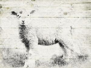 Vintage Lamb by Jace Grey