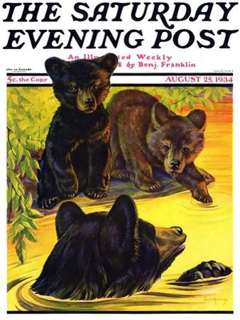 """Bear and Cubs in River,"" Saturday Evening Post Cover, August 25, 1934 by Jack Murray"