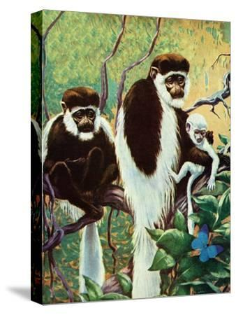 Monkeys - Child Life by Jack Murray