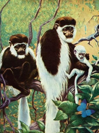 Monkeys - Child Life by Jack Murray