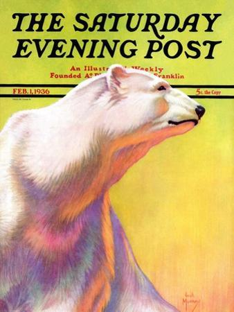 """Polar Bear,"" Saturday Evening Post Cover, February 1, 1936 by Jack Murray"