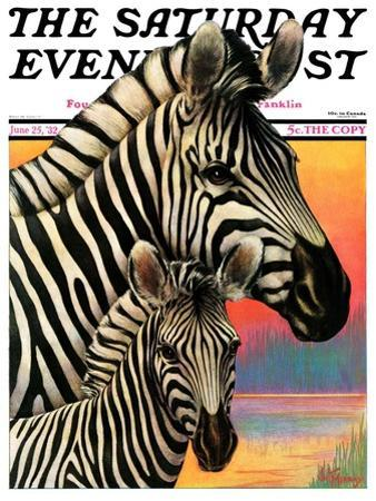 """Zebras,"" Saturday Evening Post Cover, June 25, 1932 by Jack Murray"
