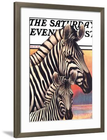 Zebras by Jack Murray