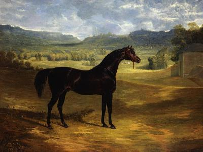 Jack Spigot, a Dark Bay Racehorse in a Paddock at Bolton Hall-John Frederick Herring I-Giclee Print