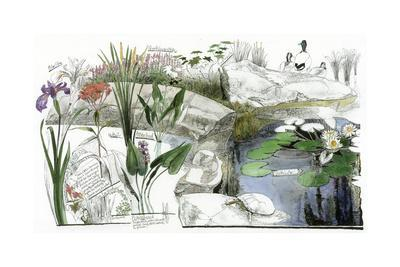 A Drawing of the Wildflowers of an American Eastern Wetland