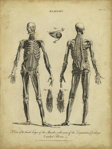 Anatomy Study II by Jack Wilkes